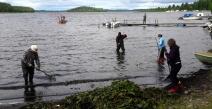 Vesikasvien niittoa kirkonkylän rannassa 14.7.2017